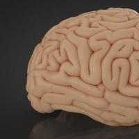 脑模型提供了对中风和其他伤害造成的损害的新见解