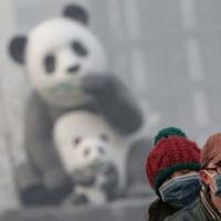 研究揭示了空气污染与儿童智力残疾之间的联系