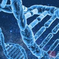 人类细胞图谱研究揭示了妊娠早期母体免疫系统的改变